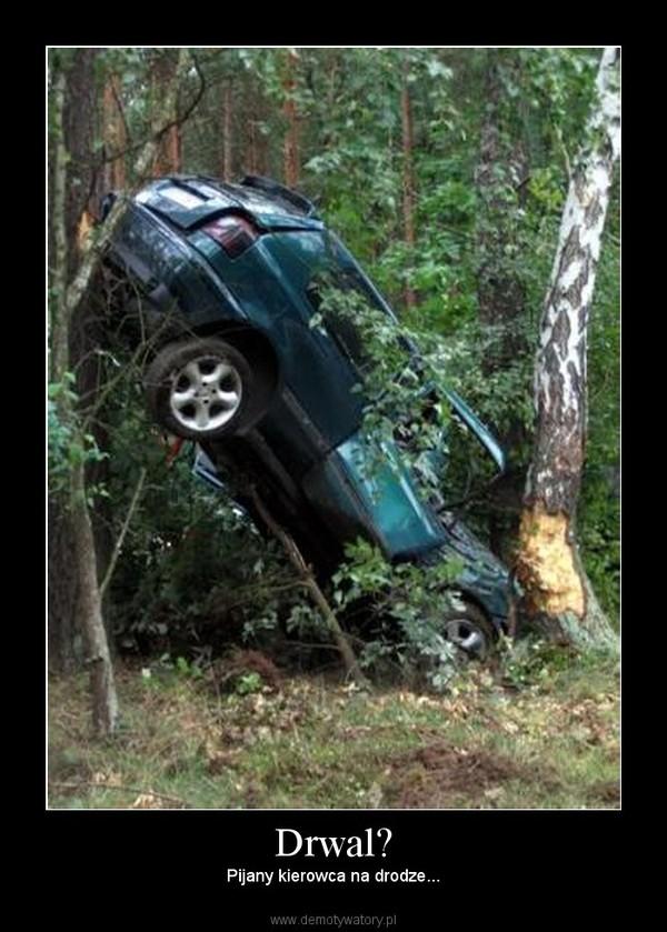 Drwal? –  Pijany kierowca na drodze...