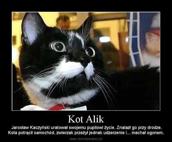 Kot Alik –  Jarosław Kaczyński uratował swojemu pupilowi życie. Znalazł go przy drodze.Kota potrącił samochód, zwierzak przeżył jednak udzerzenie i... machał ogonem.
