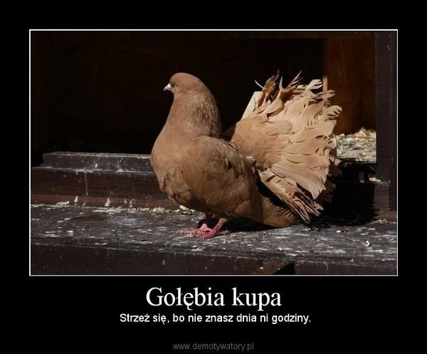 Gołębia kupa –  Strzeż się, bo nie znasz dnia ni godziny.