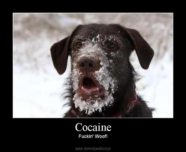 Cocaine – Fuckin' Woof!