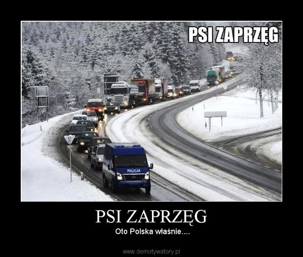 PSI ZAPRZĘG – Oto Polska właśnie....