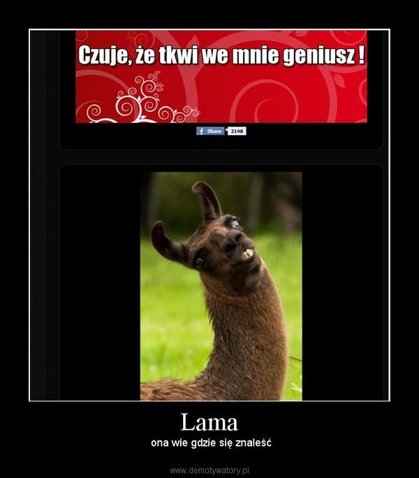 Lama – ona wie gdzie się znaleść