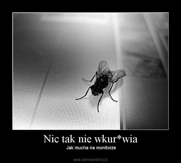Nic tak nie wkur*wia – Jak mucha na monitorze
