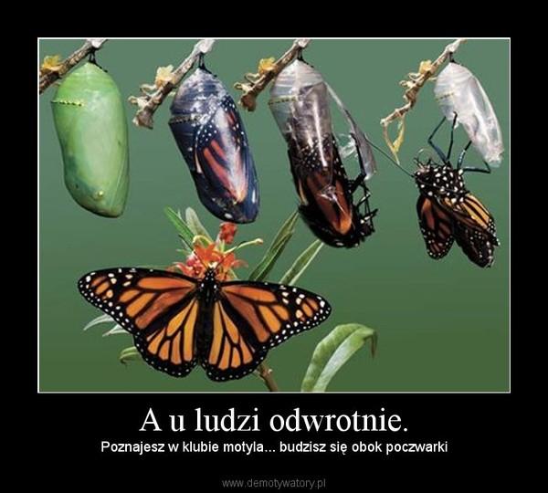 A u ludzi odwrotnie. – Poznajesz w klubie motyla... budzisz się obok poczwarki