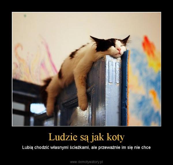 Ludzie są jak koty – Lubią chodzić własnymi ścieżkami, ale przeważnie im się nie chce