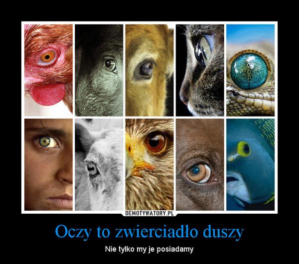 Oczy to zwierciadło duszy – Nie tylko my je posiadamy