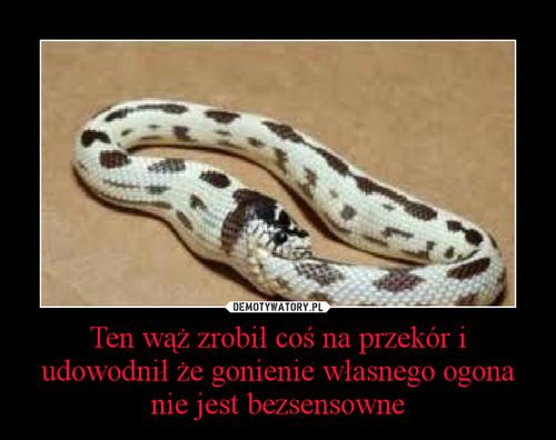 Ten wąż zrobił coś na przekór i udowodnił że gonienie własnego ogona nie jest bezsensowne