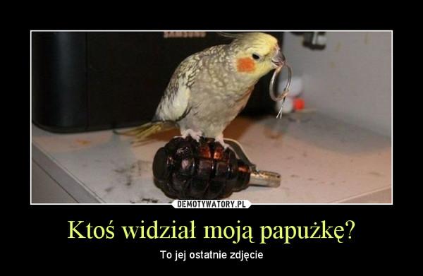 Ktoś widział moją papużkę? – To jej ostatnie zdjęcie