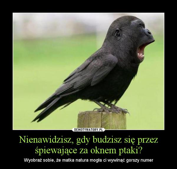 Nienawidzisz, gdy budzisz się przez śpiewające za oknem ptaki? – Wyobraź sobie, że matka natura mogła ci wywinąć gorszy numer