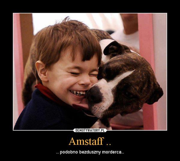 Amstaff .. – .. podobno bezduszny morderca..