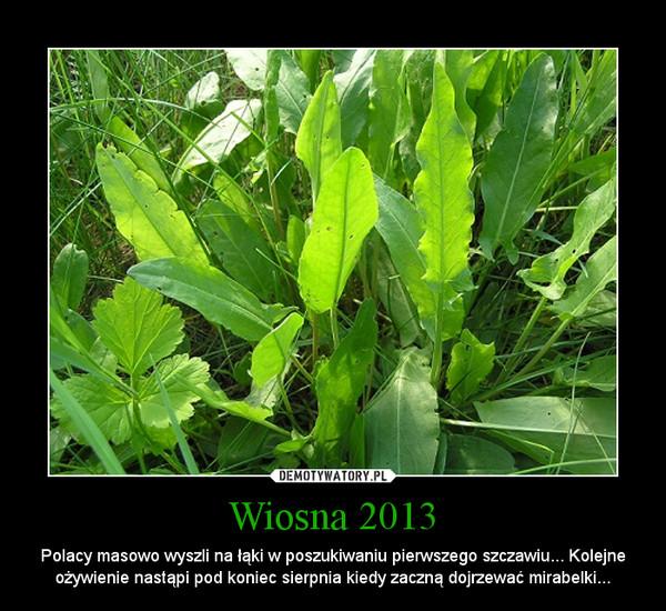 Wiosna 2013 – Polacy masowo wyszli na łąki w poszukiwaniu pierwszego szczawiu... Kolejne ożywienie nastąpi pod koniec sierpnia kiedy zaczną dojrzewać mirabelki...