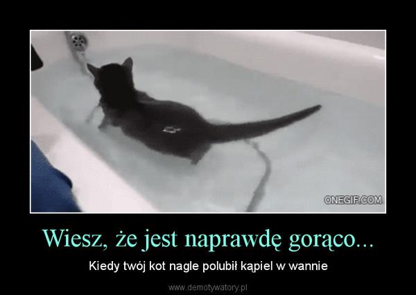 Wiesz, że jest naprawdę gorąco... – Kiedy twój kot nagle polubił kąpiel w wannie
