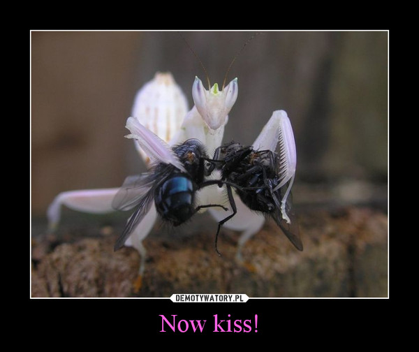 Now kiss! –