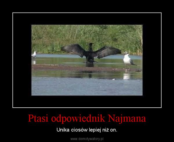 Ptasi odpowiednik Najmana – Unika ciosów lepiej niż on.