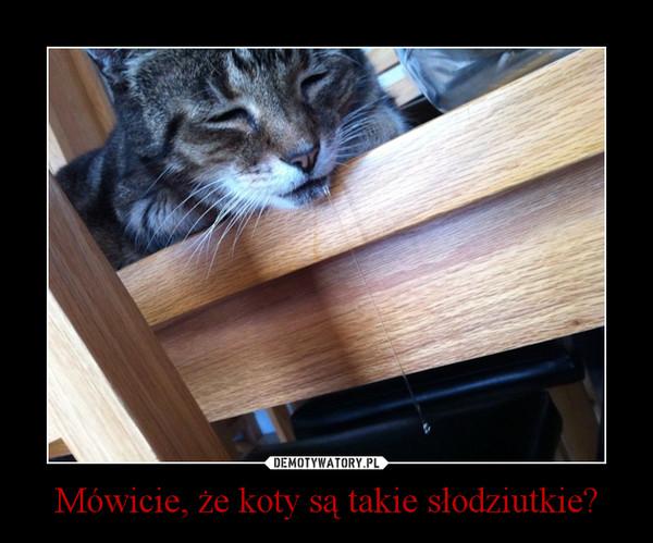 Mówicie, że koty są takie słodziutkie? –