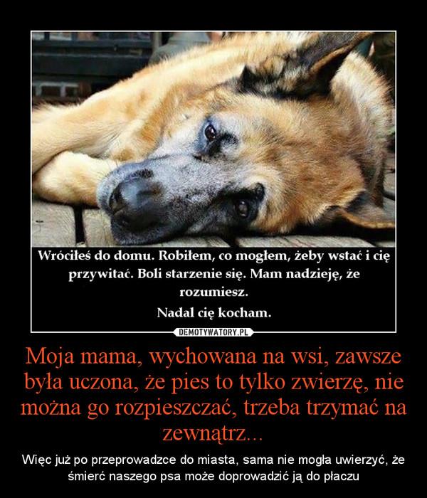 Moja mama, wychowana na wsi, zawsze była uczona, że pies to tylko zwierzę, nie można go rozpieszczać, trzeba trzymać na zewnątrz... – Więc już po przeprowadzce do miasta, sama nie mogła uwierzyć, że śmierć naszego psa może doprowadzić ją do płaczu