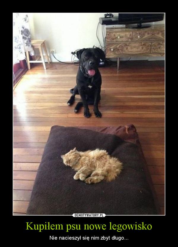 Kupiłem psu nowe legowisko – Nie nacieszył się nim zbyt długo...