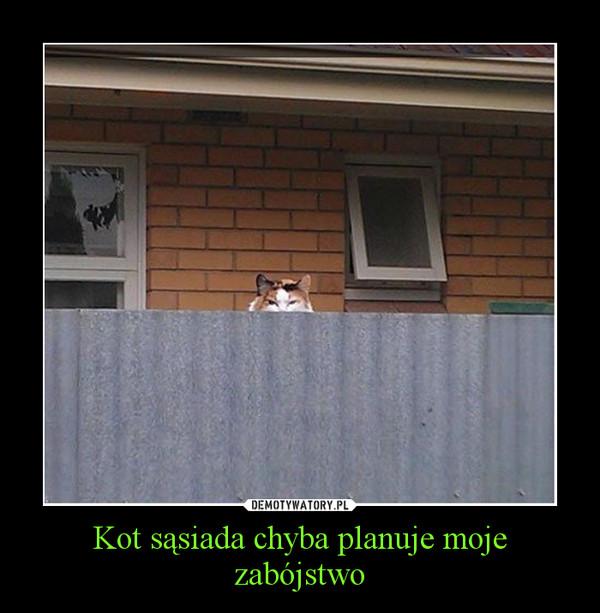 Kot sąsiada chyba planuje moje zabójstwo –