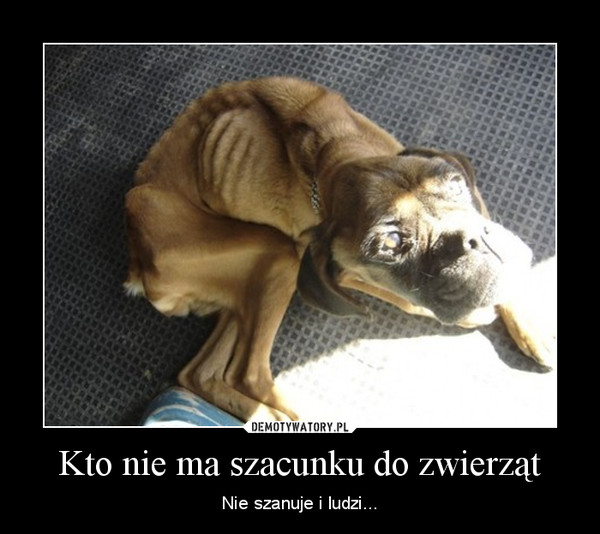 Kto nie ma szacunku do zwierząt – Nie szanuje i ludzi...