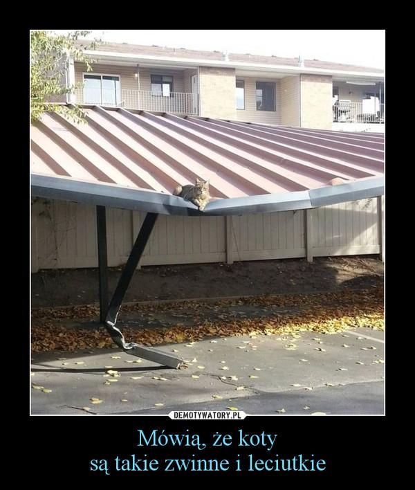 Mówią, że kotysą takie zwinne i leciutkie –