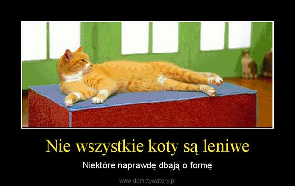 Nie wszystkie koty są leniwe – Niektóre naprawdę dbają o formę