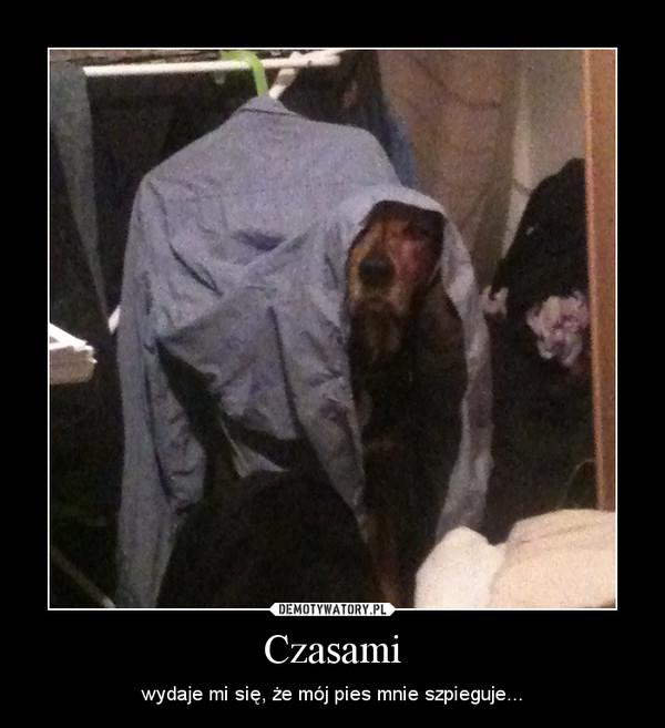 Czasami – wydaje mi się, że mój pies mnie szpieguje...