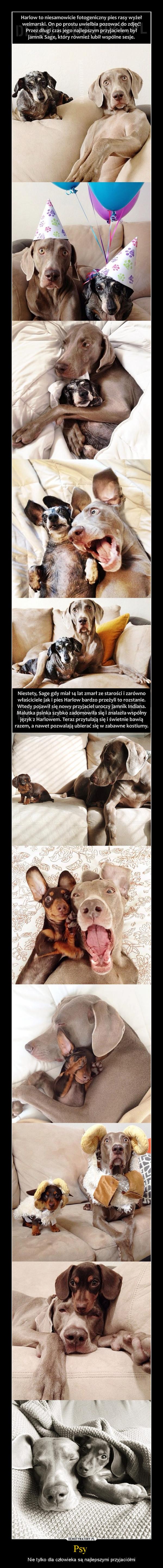 Psy  – Nie tylko dla człowieka są najlepszymi przyjaciółmi