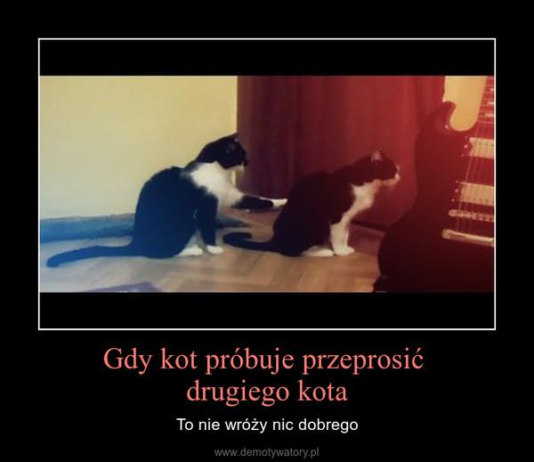 Gdy kot próbuje przeprosić drugiego kota – To nie wróży nic dobrego