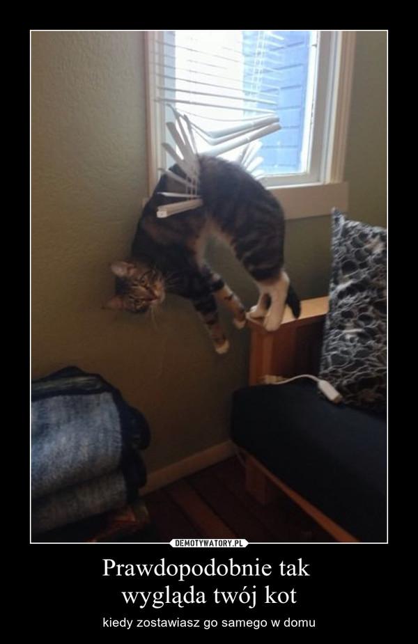 Prawdopodobnie tak wygląda twój kot – kiedy zostawiasz go samego w domu