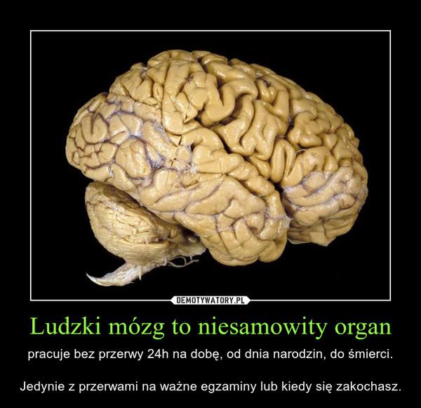 Ludzki mózg to niesamowity organ – pracuje bez przerwy 24h na dobę, od dnia narodzin, do śmierci.Jedynie z przerwami na ważne egzaminy lub kiedy się zakochasz.