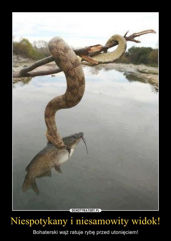 Niespotykany i niesamowity widok! – Bohaterski wąż ratuje rybę przed utonięciem!