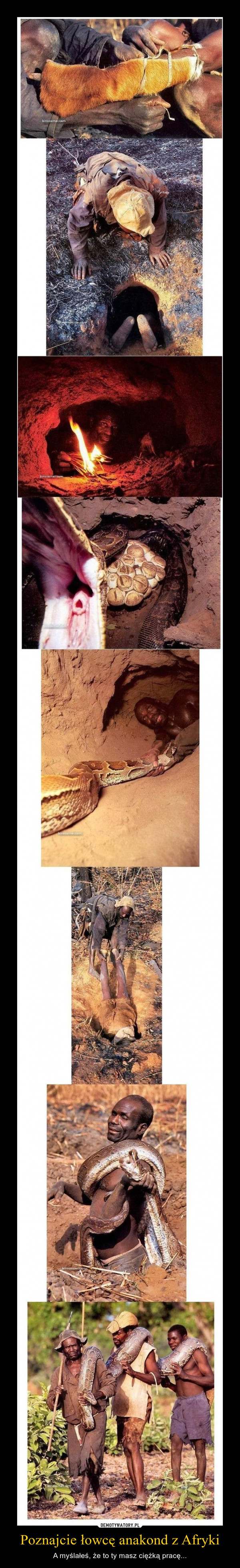 Poznajcie łowcę anakond z Afryki – A myślałeś, że to ty masz ciężką pracę...