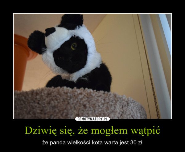Dziwię się, że mogłem wątpić – że panda wielkości kota warta jest 30 zł