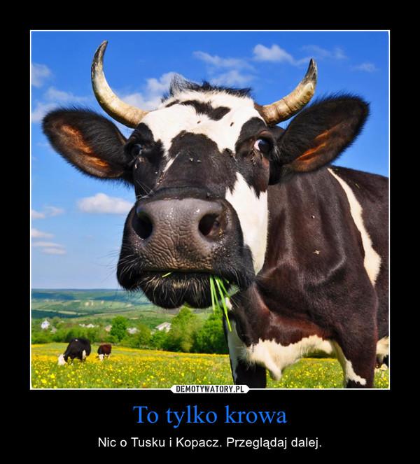 To tylko krowa – Nic o Tusku i Kopacz. Przeglądaj dalej.