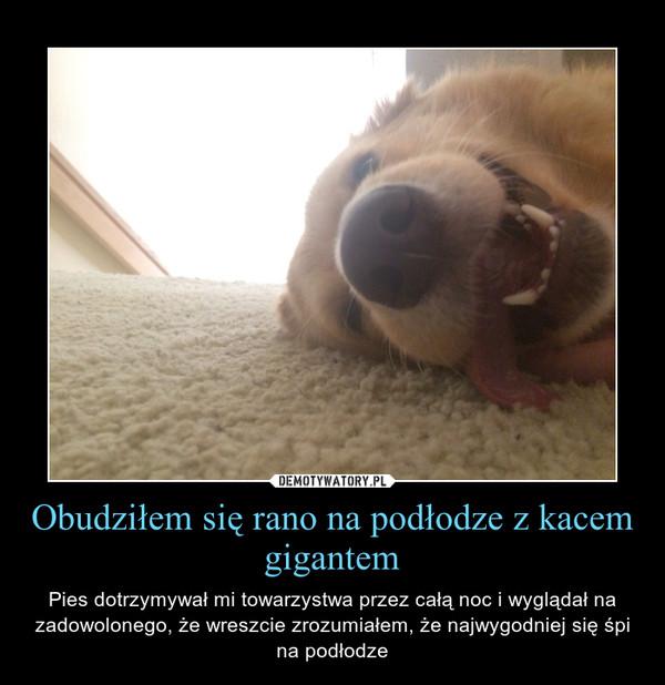 Obudziłem się rano na podłodze z kacem gigantem – Pies dotrzymywał mi towarzystwa przez całą noc i wyglądał na zadowolonego, że wreszcie zrozumiałem, że najwygodniej się śpi na podłodze