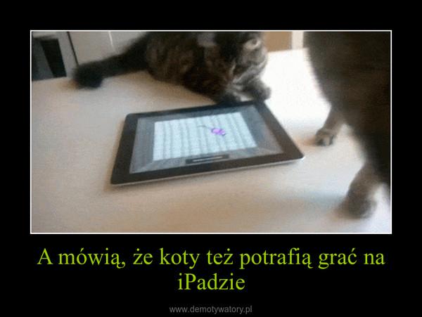 A mówią, że koty też potrafią grać na iPadzie –