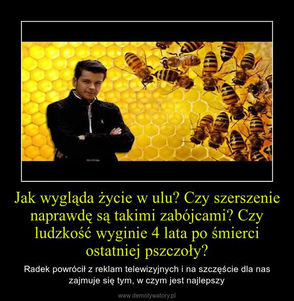 Jak wygląda życie w ulu? Czy szerszenie naprawdę są takimi zabójcami? Czy ludzkość wyginie 4 lata po śmierci ostatniej pszczoły? – Radek powrócił z reklam telewizyjnych i na szczęście dla nas zajmuje się tym, w czym jest najlepszy