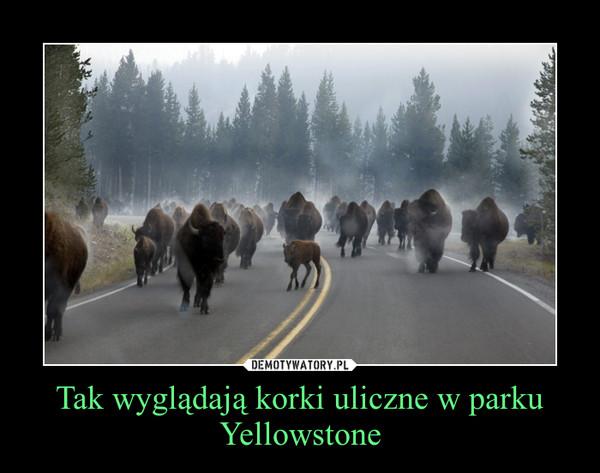 Tak wyglądają korki uliczne w parku Yellowstone –