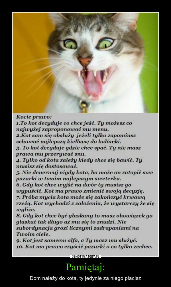 Pamiętaj: – Dom należy do kota, ty jedynie za niego płacisz