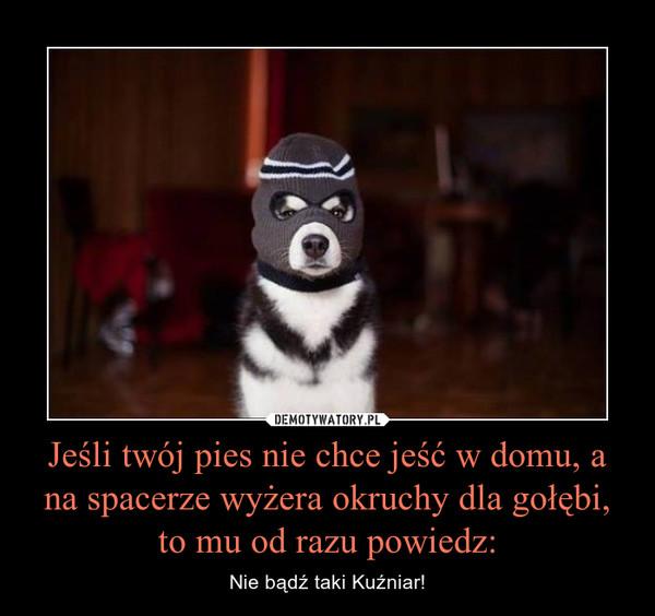 Jeśli twój pies nie chce jeść w domu, a na spacerze wyżera okruchy dla gołębi, to mu od razu powiedz: – Nie bądź taki Kuźniar!