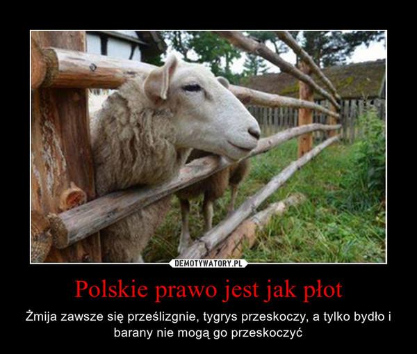 Polskie prawo jest jak płot – Żmija zawsze się prześlizgnie, tygrys przeskoczy, a tylko bydło i barany nie mogą go przeskoczyć