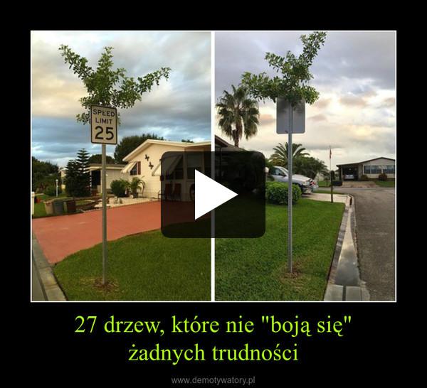 """27 drzew, które nie """"boją się""""żadnych trudności –"""