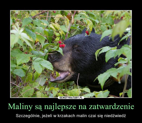 Maliny są najlepsze na zatwardzenie – Szczególnie, jeżeli w krzakach malin czai się niedźwiedź