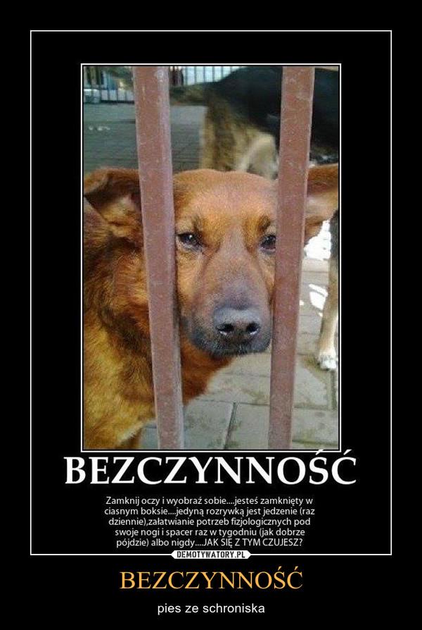 BEZCZYNNOŚĆ – pies ze schroniska