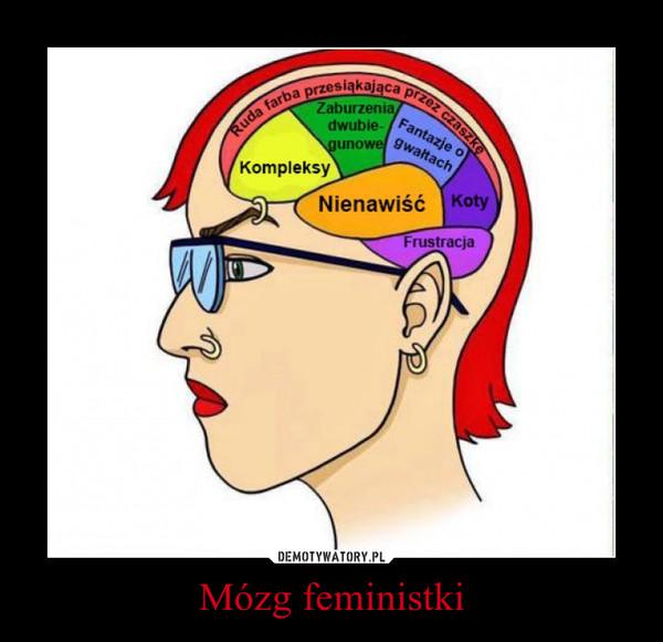 Mózg feministki –
