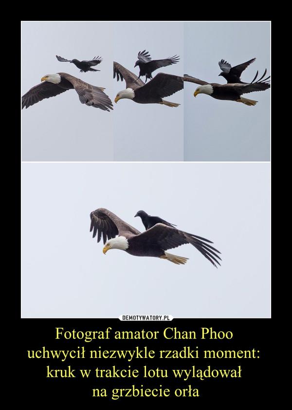 Fotograf amator Chan Phoo uchwycił niezwykle rzadki moment: kruk w trakcie lotu wylądował na grzbiecie orła –