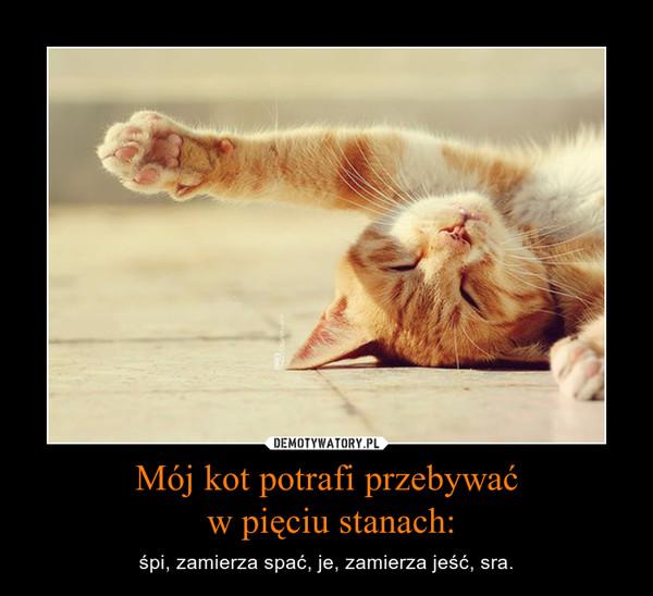 Mój kot potrafi przebywać w pięciu stanach: – śpi, zamierza spać, je, zamierza jeść, sra.