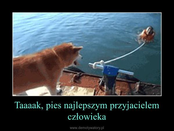 Taaaak, pies najlepszym przyjacielem człowieka –