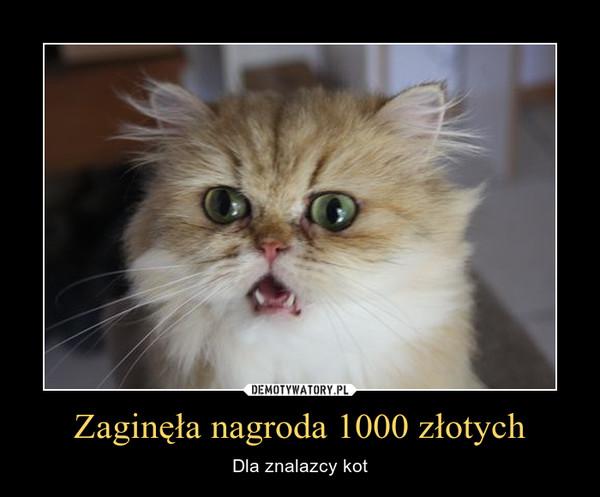 Zaginęła nagroda 1000 złotych – Dla znalazcy kot