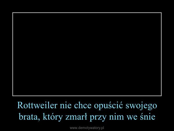 Rottweiler nie chce opuścić swojego brata, który zmarł przy nim we śnie –